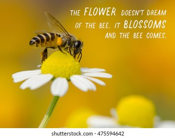 Images of Yellow Flowers with Quotes Images, Stock Photos ...