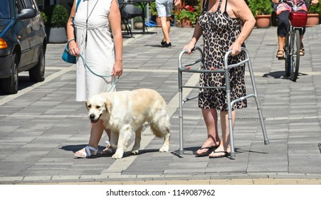 Life on the city street with dog and walker