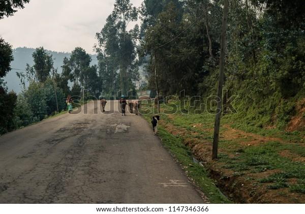 Life on Mount Entoto in Ethiopia
