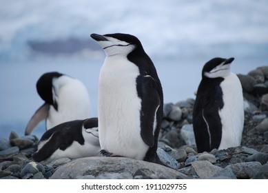 The life of penguins in Antarctica