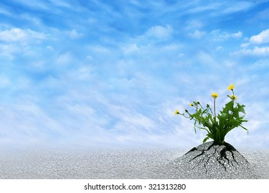 Life Persists. Inspirational and conceptual image for hope, winning, never give up, struggle, persistence, motivation etc. Copy space for presentation text.
