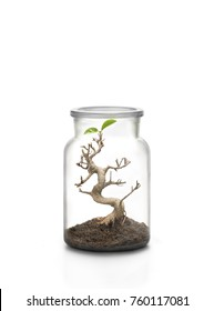 Life protection concept. Glass jar and bonsai and two leaves growing inside with a pile of soil