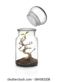 Life protection concept. Survival plant concept Glass jar with cap and bonsai growing with soil  inside