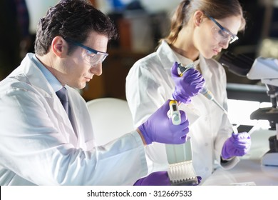 Life scientist researching in laboratory. Focused life science professionals pipetting master mix solution into the PCR 96 well micro plate using multi channel pipette. Healthcare and biotechnology.