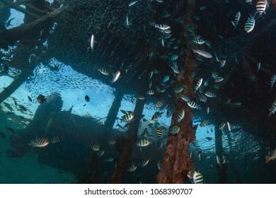 Life under jetty. Wonderful underwater world. Picture was taken in the Ceram sea, Raja Ampat, West Papua, Indonesia