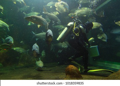 Life under the sea. Marine life with beautiful creature.