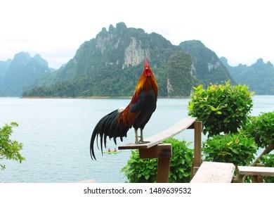 Life of the wild fowl  (jungle fowl)