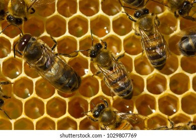 Life and work of colony of bees. Work in a team.