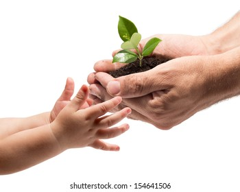 life in your hands - plant whit white background
