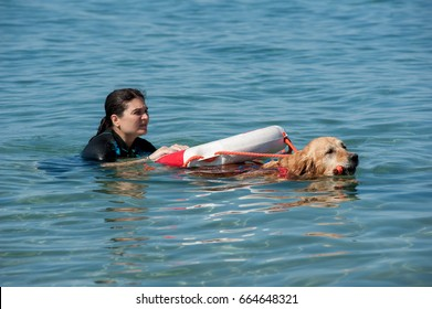 Lifeguard dog and instructor at the beach, during training.