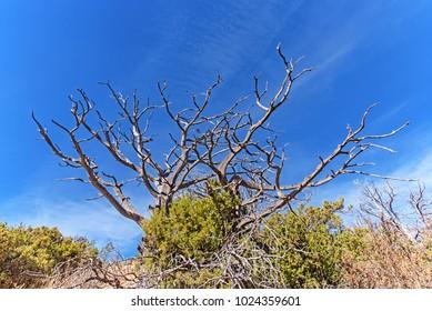 A lifeless tree.