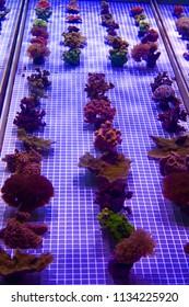Lifelike Ocean Coral