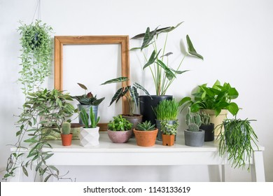 Lifestyle home decoration with houseplants and blank wooden frame  on table in room