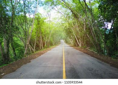 (Light added) Tree tunnel, Thailand.