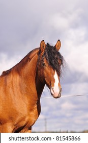 light bay horse portrait