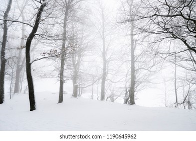 Light blizzard and snowfall through leafless trees, the ground covered in snow, on a cold day of winter, near Schwabisch Hall, Germany.