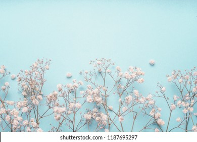 Light blue floral background border with white Gypsophila flowers. Baby's-breath flowers on pastel blue desktop. Flat lay spring and summer