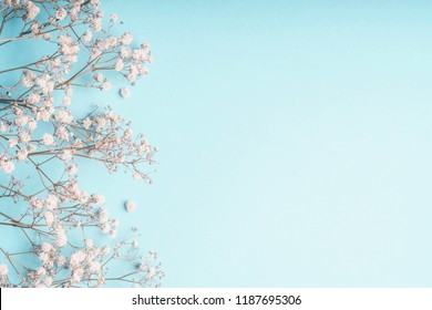 Light blue floral background with white Gypsophila flowers and copy space for your design. Baby's-breath flowers on pastel blue desktop.