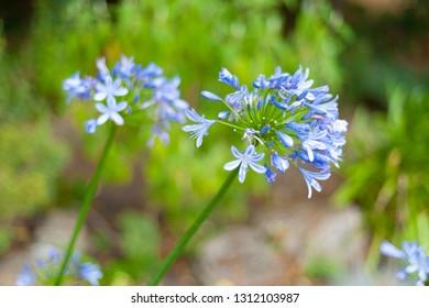 Light blue flowers on green background.