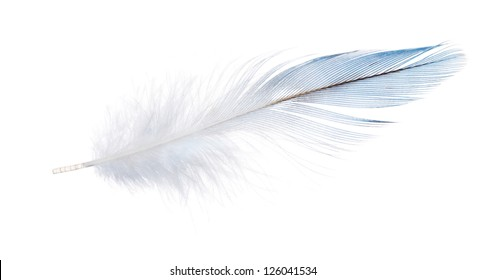 light blue parrot feather isolated on white background