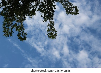Light blue sky with cotton balls of white clouds and tree branches with green leaves curled in circles