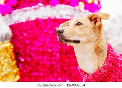 Light brown dog sitting on pink decorative background