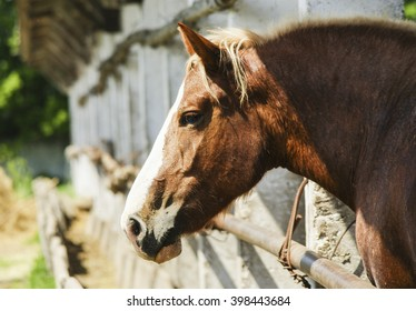 light brown horse on sand on the background of wooden fence in the paddock