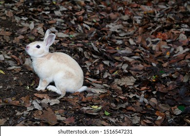 Light brown rabbit and dead leaves.