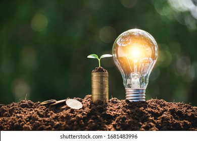 Light bulb with coins beside and young plant on top concept put on the soil in soft green nature background.