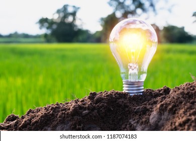 Light bulb concept energy an idea put on the soil on green nature background.