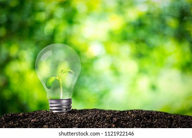 Light bulb glowing in soil , idea or energy and environment concept