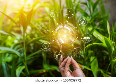 Light bulb and  growing on stacks of coins on nature green background.