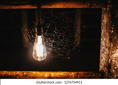 light bulb illuminates spider web