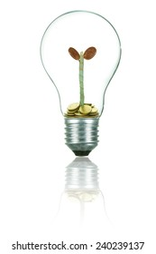 Light Bulb with Money Tree .Growing concept.