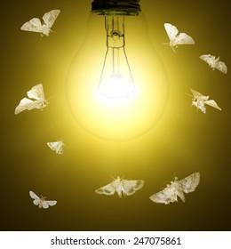 Light bulb and moths flying around
