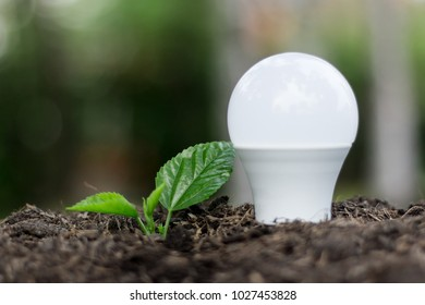 Light bulb plant and Green plant is growing  in soil as idea or energy concept ,ecology ideas growth concept - Energy concept