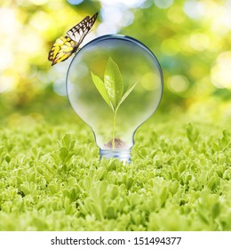 Light bulb with plant growing inside on green grass and butterfly. Concept of Eco technology
