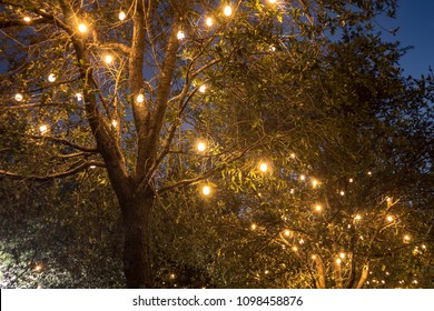 Light bulb series urban decoration night trees branch with warm lights