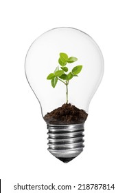 Light bulb with small green plant inside.
