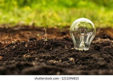 Light bulb in soil. Concept of saving energy