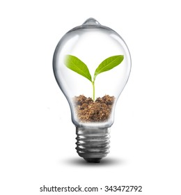 Light Bulb with soil and green plant sprout inside. Ecology Concept.