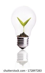Light Bulb with soil and seed in light bulb