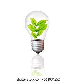 Light Bulb with sprout inside isolated on white background / Ecological and energy concept