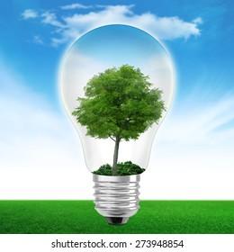 Light bulb with tree