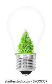 light bulb with a tree