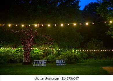 Light bulbs hanging from a tree in the area of wedding ceremony in evening