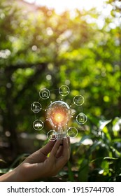 Light bulbs that grow, in the concept of energy in nature.