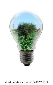 light bulbs with tree