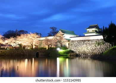 Light Up Cherry Blossoms, Fukuoka Japan