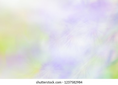 Light colored violet flower blurred background, background substrate movement